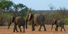 Wild South Africa Kruger National Park