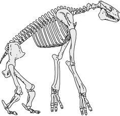 Resultado de imagen de chalicotherium skeleton