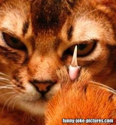 Funny Angry Middle Finger Cat Meme Picture   Funny Joke Pictures