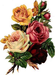 Scraps -Plaatjes: Rose - Rose Victorian Die Cut - Victorian Scrap - Tube Victorienne - Glansbilleder -