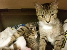 Vet care for Mother and three kittens  (Furry Friends Rescue Center Non Profit 501C3 Rescue )