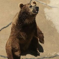 Ask the USDA to Protect Captive Bears ! PLEASE SIGN ! ! - Care2 News Network