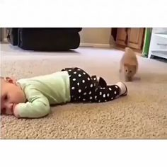 Sock thief - your daily dose of funny cats - cute kittens - pet memes - pets in clothes - kitty breeds - sweet animal pictures - perfect photos for cat moms Funny Animal Videos, Cute Funny Animals, Funny Animal Pictures, Animal Memes, Cute Baby Animals, Funny Cute, Cute Cats, Cute Pictures, Sock Animals