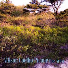 Through my eyes © 2016 Allison Coelho Picone, All rights reserved