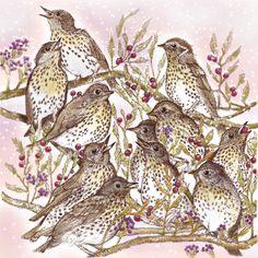 Home - Fay's Studio Hand Illustration, Blackbird, Studio, Drawings, Artist, Prints, Greeting Cards, Paintings, Animals