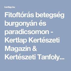 Fitoftórás betegség burgonyán és paradicsomon - Kertlap Kertészeti Magazin & Kertészeti Tanfolyamok