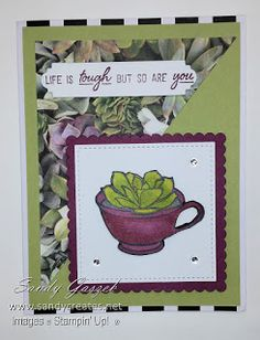 These size cards feature the February 2019 Paper Pumpkin kit Grown With Kindness from Stampin' Up! This is part 1 of a 5 part series. Succulent Images, Stampin Up Paper Pumpkin, Pumpkin Cards, Stamping Up Cards, Card Kit, My Stamp, Paper Crafts, Card Crafts, Daffodils