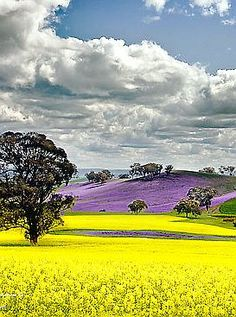 Rapeseed field in #Canada. #Color #Photography TravelPhotoTours.com / TravelBoldly.com / JeromeShaw.com