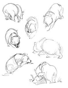 how to draw a grizzly bear step by step easy
