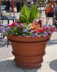 Full sun large container annuals tropical perennials · Container Gardening Ve ablesIndoor