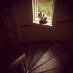 Hallcat
