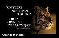 Un tigre no pierde el sueño por la opinión de las ovejas. #creandobienestar #ventadirecta