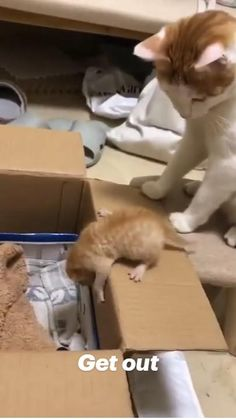 Cute Animal Videos, Funny Animal Pictures, Cute Funny Animals, Cute Baby Animals, Funny Dogs, Animals And Pets, Funny Animal Memes, Funny Memes, Cute Kittens