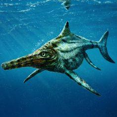 Dolphin Images, Evolutionary Biology, Marine Ecosystem, Teeth Shape, Field Museum, Crocodiles, Marine Life, Sea Creatures, Ecology