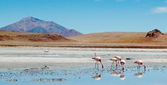 Salar de Uyuni (Salt Flats of Bolivia) - 4 day 4x4 trek tips