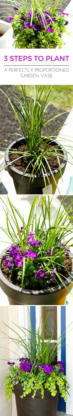 Planting a Perfectly Proportioned Garden Vase -- three easy steps to planting a garden vase that will be a beautiful focal point for your front porch or deck! | via @unsophisticook on unsophisticook.com