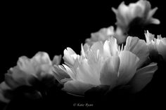 Black&White Flower Photography, Peonies by KateRyanFineArt