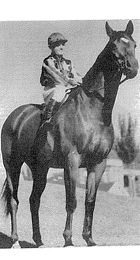 SHADOW KING (Aus) B g 1925, Comedy King (GB) - Beryllia. The bridesmaid of the Melbourne Cup, this public favourite started in the great race six times for two seconds, two thirds, a fourth and a sixth. In 1930, he ran third to the mighty Phar Lap. At his final attempt in 1935, he was given the honour of leading out the field. Later a police horse, he died in 1943, aged 17.