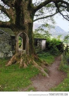 #tree #doorway