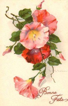 Art by Catherine Klein. Catherine Klein, Illustration Botanique, Botanical Illustration, Botanical Prints, Flower Images, Flower Pictures, Flower Art, Victorian Flowers, Vintage Flowers