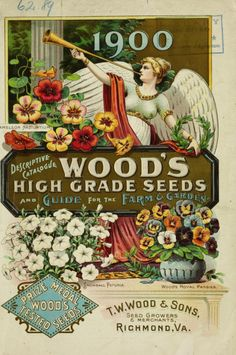 1900 catalogue with illustrations of petunias, pansies, nasturtiums and an angel holding a laurel crown.