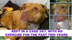 Dog kept by police in a cage for the past two years will be EUTHANIZED! Save Bella Now!