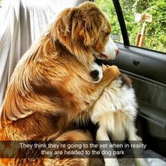 Picture # 184 collection funny dogs picture pics) for December 2015 – Funny Pictures, Quotes, Pics, Photos, Images and Very Cute animals. Funny Animal Pictures, Funny Animals, Cute Animals, Adorable Pictures, Funniest Pictures, Baby Animals, Super Pictures, Smile Pictures, Cute Puppies