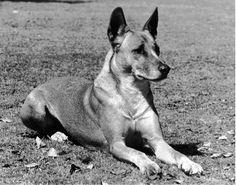 Dingo Lady: Berenice's Love for Napoleon