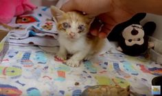 Vet Saves Saddest Looking Kitten and Spends Two Months Nursing Him Back to Health