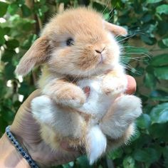 Post with 2091 votes and 90798 views. Tagged with cute, animals, cuteness overload, adorbs, baby bunnies; The Animals, Baby Animals Pictures, Cute Little Animals, Fluffy Animals, Cute Animal Pictures, Cute Funny Animals, Cutest Animals, Jungle Animals, Photos Of Cute Babies