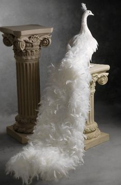 This is cool. Wedding Decorations ceremony or reception - white peacock feathers glamorous and dramatic