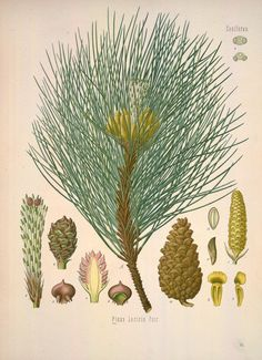 v.2 - Köhler's Medizinal-Pflanzen in naturgetreuen Abbildungen mit kurz erläuterndem Texte : - Biodiversity Heritage Library
