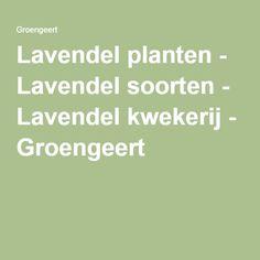 Lavendel planten - Lavendel soorten - Lavendel kwekerij - Groengeert