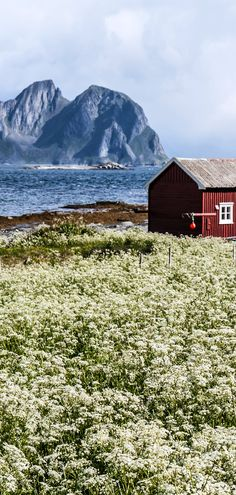 a field of wildflowers in #Norway