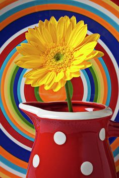 Yellow Daisy In Red Pitcher.