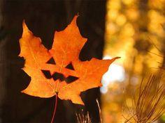 .Fall. t