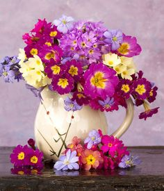Vase of polyanthus primulas. Why not try some of the Victorians with some Chatreuse. http://www.barnhaven.com/victorian-polyanthus