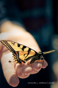 wildly simple: Happiness is a Butterfly