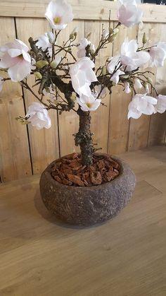 Magnoliaboom in prachtige landelijke pot! Shop bij Bellisimo wonen en genieten…