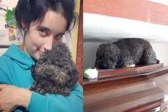A história do poodle que há 4 anos visita sua dona no cemitério - GreenMe Brasil