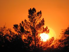 nature sunrise forest tree tops (to get full size image visit the site)