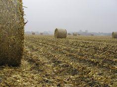Bales of corn stover, Nebraska. Source: USDA/Wally Wilhelm.