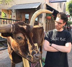 Confident Dan with a bull