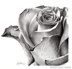 Color Pencil Drawing - Rose Drawing and Paintings: In the earlier post we have shown you some beautiful Flower drawings, now in this post we have included some 25 Beautiful Rose drawings and paintings for your inspiration Realistic Flower Drawing, Simple Flower Drawing, Pencil Drawings Of Flowers, Realistic Pencil Drawings, Flower Sketches, Rose Drawings, Draw Flowers, Flower Sketch Pencil, Floral Drawing