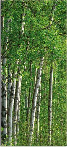 Tapeta brzozy / lasy / Fototapety z krajobrazem - Fototapety na wymiar, do… Lasy, Plants, Plant, Planets
