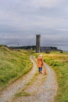 Mornington Dog Walking, Walks, My Photos, Country Roads, Dogs, Pet Dogs, Doggies, Dog