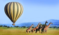 Luxury Tanzania Delight Tour: Travel Tanzania luxury tour & holidays for 9 Days with Hi Tours India. Book holiday in Tanzania's wildlife safari tourist destinations with amazing tour packages to Tanzania in East Africa at lowest prices, hitours. Air Ballon, Hot Air Balloon, Serengeti National Park, Tanzania Safari, Wildlife Safari, Balloon Rides, Great Places, Amazing Places, Beautiful Places
