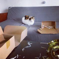 Behind the scenes 🤭 Miau, pisica de serviciu veghează haosul din pre-livrări 🙀 .  Doar miercuri facem livrările (cu @ciclocurier in Timisoara și cu DPD in restul țării). Doar miercuri mai vine @ioanamuresan_ la birou, ea a și surprins momentul în foto.💛 .  În rest lucrăm de la distanță : grup de messenger, telefoane, fișiere pe drive, ne organizam cum putem si uneori e haos. Ne mai încurcam în etichete, în adrese de livrare, în mailuri și proceduri. 😬 .  Presupun ca nu e ușor pentru…