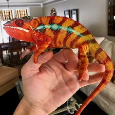 Can you name this species and locale? Tag someone who'd want one! #reptiles #reptilesofinstagram #nature