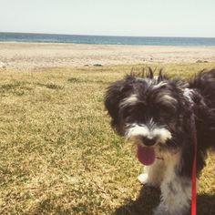 Primera visita de Twiggy a la playa